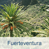 Reisen nach Fuerteventura